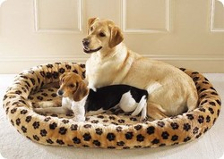 leapord dog and puppy bed